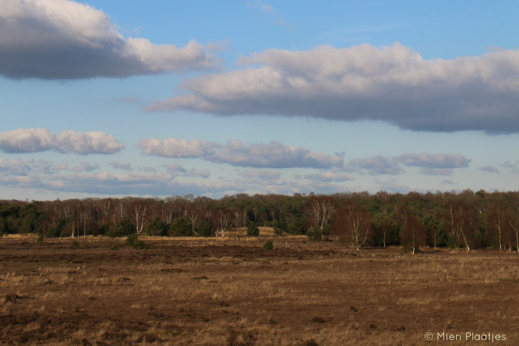 Heide bij Vilsteren